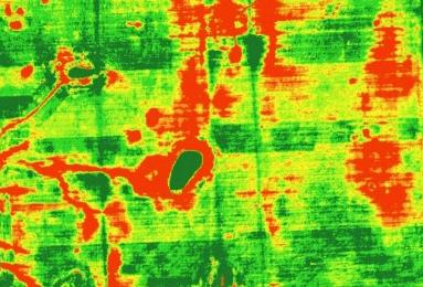 Фрагмент карты вегетационных индексов (НДВИ) / precisionagricultu.re