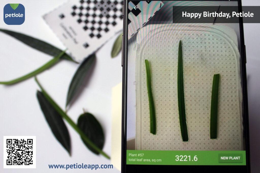 Story of Petiole: Happy Birthday!